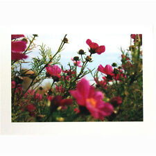 """Any Occasion Notecards by Photographer Sue Wiebelhaus 5"""" x 7"""" with Envelope"""