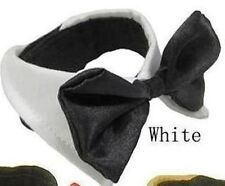 Fancy White Bow Tie Pet Collar for dog cat small animal Birthday party wedding