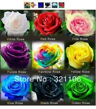 Rose Seeds 50 pcs Ea Red White Pink Purple Rainbow Yellow Blue Black Green