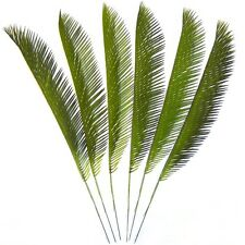 Cycas Palm leaves - Palm Sunday - Easter - Choose Your Quantity