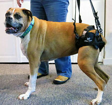 Walkin' Lift Rear Dog Harness - Gently Used