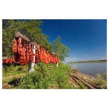 Poster Print Wall Art entitled Red Salmon hang on drying rack along Kuskokwim