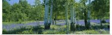 Poster Print Wall Art entitled Field of lupine and aspen trees, Wasatch Plateau,