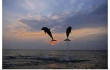 Poster Print Wall Art entitled Pair of Bottle Nose Dolphins Jumping @ Sunset