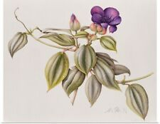 Poster Print Wall Art entitled Glory Flower (Tibouchina Urvilleana) 1999 (w/c on