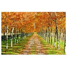 Poster Print Wall Art entitled Autumn tree with fallen leaves.