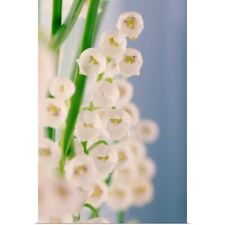 Poster Print Wall Art entitled Lily of the valley (Convallaria majalis)