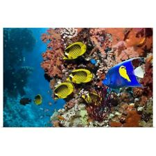 Poster Print Wall Art entitled Tropical reef fish
