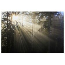 Poster Print Wall Art entitled Sun Shining Through Morning Fog And Trees; Happy