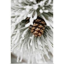 Poster Print Wall Art entitled Frost Covered Pine Needles And A Pine Cone,