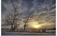 Poster Print Wall Art entitled Snow Covered Trees Silhouetted By Sunrise On The