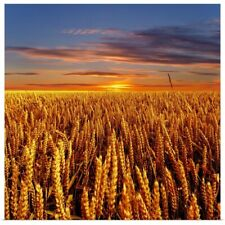 Poster Print Wall Art entitled Sunset over field
