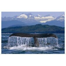Poster Print Wall Art entitled Humpback Whale Tail On Surface Just Before