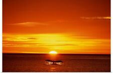 Poster Print Wall Art entitled Humpback Whale Tail At Sunset