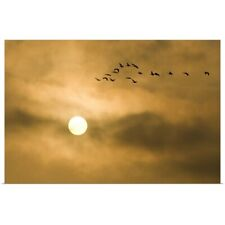 Poster Print Wall Art entitled Canada geese, Branta canadensis, Stanley Park,