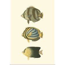 Poster Print Wall Art entitled Antique Tropical Fish IV