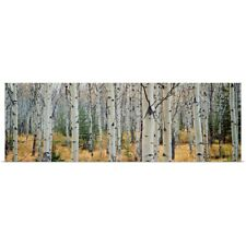 Poster Print Wall Art entitled Aspen trees in a forest, Alberta, Canada