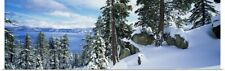 Poster Print Wall Art entitled Snow covered trees on mountainside, Lake Tahoe,