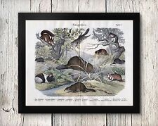 Natural History Rodents Guinea Pig Beaver Hamster Poster Print 8x10 to 24x30
