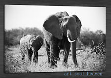 Oil Painting HD Print Wall Decor Art On Canvas,Elephant 01 24x36 (Unframed)