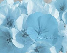 Sweet Flowers -Blue Wall Art Photography Home Decor Picture  Living Room
