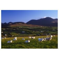 Poster Print Wall Art entitled Aughrim Hill, Mourne Mountains, County Down,