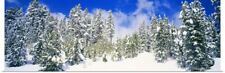 Poster Print Wall Art entitled Pine trees on a snow covered hill, Breckenridge,