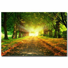 Morning Sunrise - Forest Path Nature Poster Trees