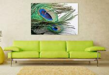 Stunning Poster Wall Art Decor Peacock Feather Peacock Feather 36x24 Inches