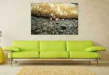 Stunning Poster Wall Art Decor Crab Crustacean Boxer Crab Shell 36x24 Inches