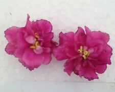 African Violet Plant- Floozie (2 inch potted plant)