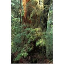 Poster Print Wall Art entitled Canada, British Columbia, Queen Charlotte