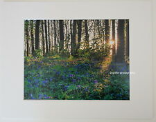 """Bluebell Woods"", Pembrokeshire  Limited Edition Mounted Photographic Print"
