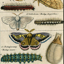 Insects Moths and Caterpillars 1843 Oken Repro Photo Poster Print 11x14 to 30x40