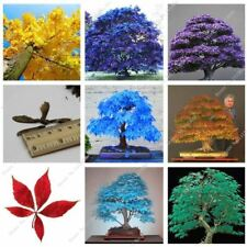 20Pcs/Bag Japanese Maple Fire Bonsai Flower Tree Seeds Potted Plant 98% Germinat