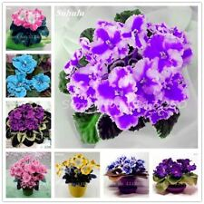 120 Pcs Exotic african violet seeds Mixed colors Flower Seed Saintpaulia Ionanth