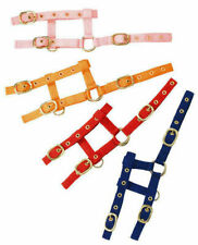 Foal Sized Nylon Adjustable Headcollar/Halter with Short Lead Rope - 14 colours!