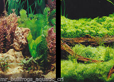 "Aquarium Fish Tank Background by the foot  ~ 12"" Height Two-Sided ~ style 715"