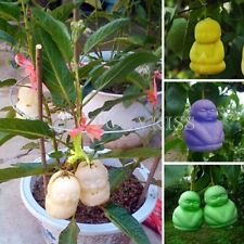20 x Rare Creative Colorful Ginseng Fruit Seed 8 Colors Balcony Plant Garden LJN