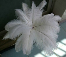 Wholesale 50/100/200/500/1000pcs white soft 12-14inch Ostrich Feathers!!