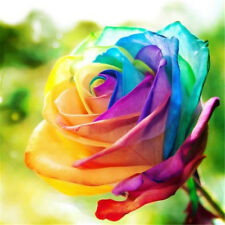 100Pcs Multi-colors Flower Plant Seed Holland Rose Seed Lover Friend Gift Garden