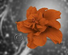 Dreaming - Orange Floral Home Decor Picture Wall Art Living room Bedroom  1