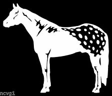 APPALOOSA HORSE Decal/Sticker white rodeo ranch