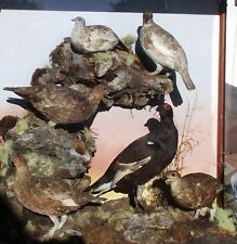 Historical case of British Grouse by Leadbeater
