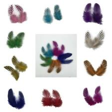 50PCS Dyeing Guinea Hen Feather Chicken Feathers Crafts Embellishment Decors