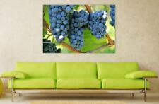 Canvas Poster Wall Art Print Decor Grapes Wine Vine Winegrowing Plant