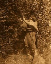 Berry-picker - Clayoquot - Edward Curtis Native American Photo