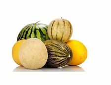 Multiple Variations of Rare Melon Seeds Watermelon Musk Big Cantaloupe Garden