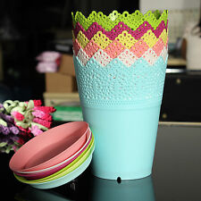 Colorful  Crown Lace Plant Planter Flower Plant Pot Indoor Outdoor Garden