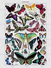 PAINTING PAGE ADOLPHE MILLOT BUTTERFLIES BUTTERFLY ART PRINT POSTER LAH713